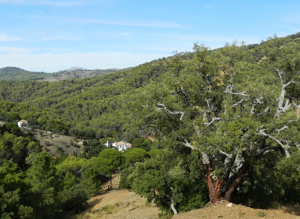 Malaga_Andalusia_Cosa vedere_ Lagar_Montes Malaga