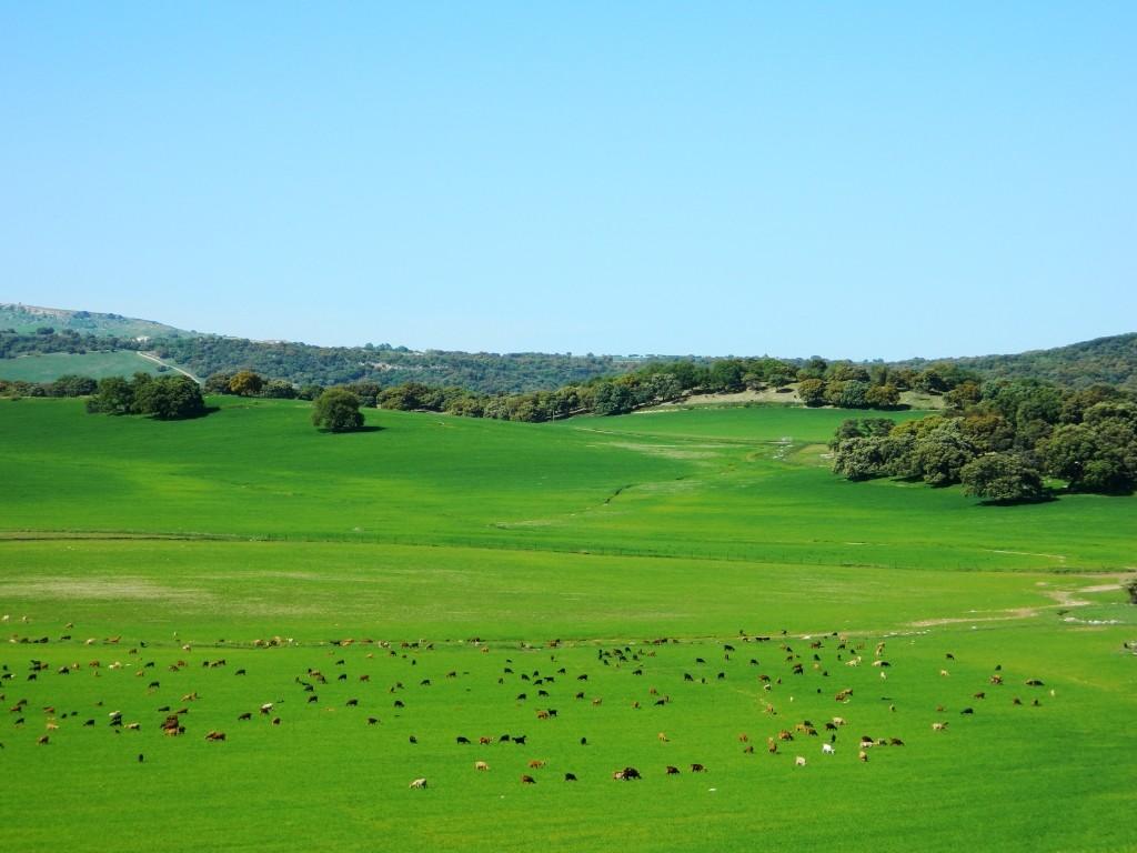 alcornocales_cadice_cadiz_andalusia_andalucia_cosa-vedere_consigli_tour