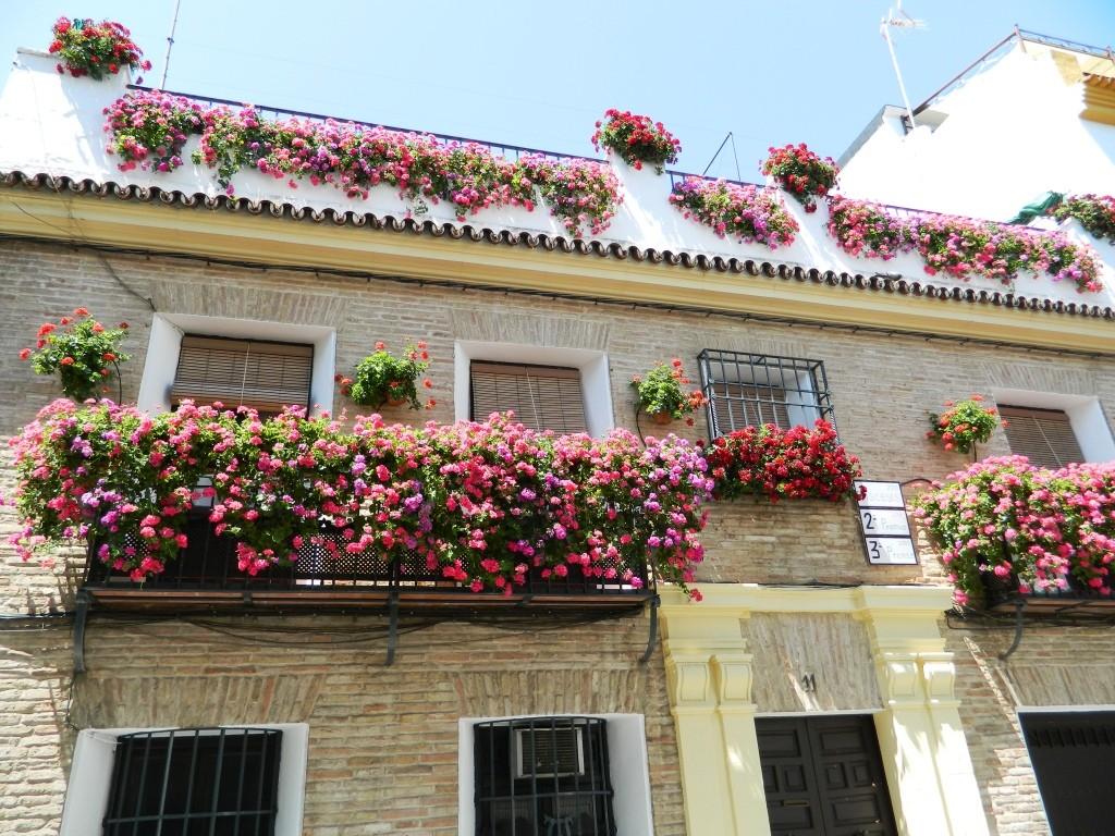 I cortili (patios) di Cordoba - balcone