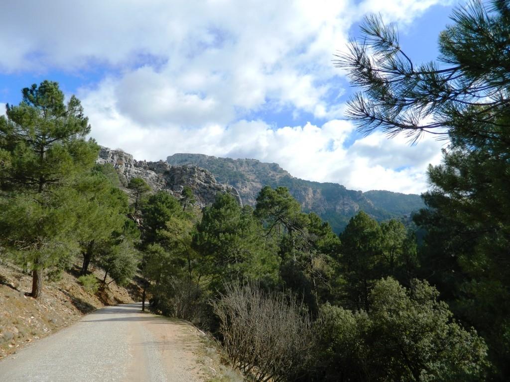 Una pista forestale transitabile in auto nella Sierra di Cazorla.