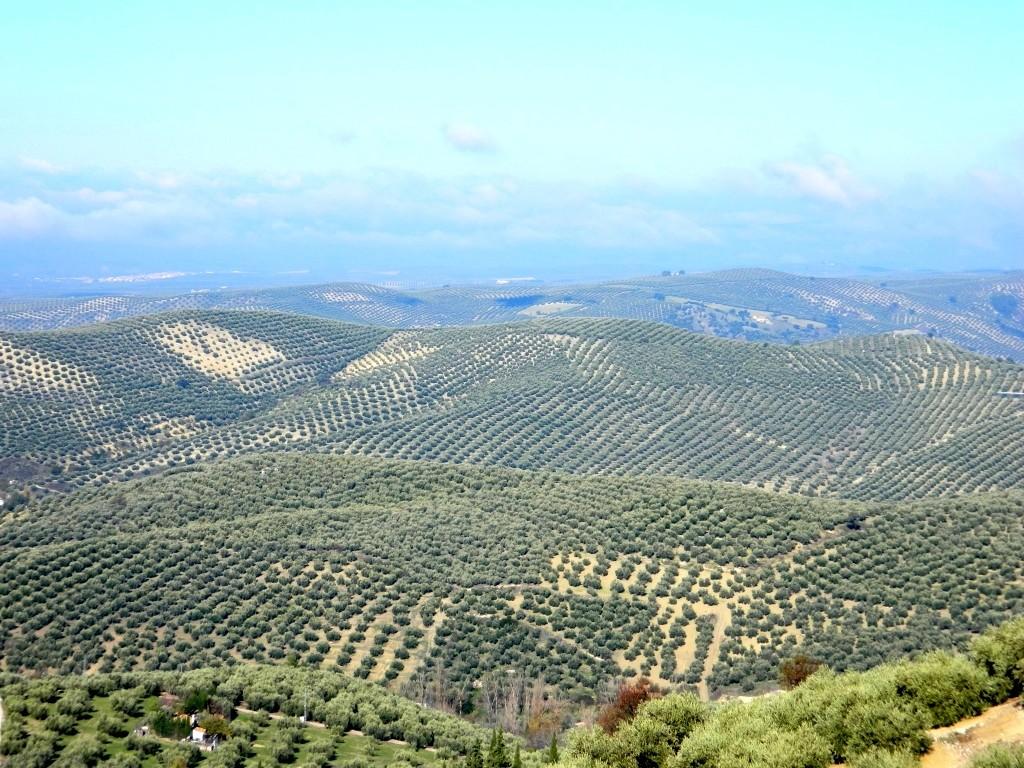 jaen_andalusia_viaggio_tour_vedere_consigli_andalucia_visitare