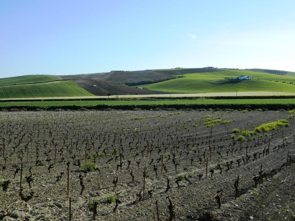 Cantina Bodega Jerez paesaggio