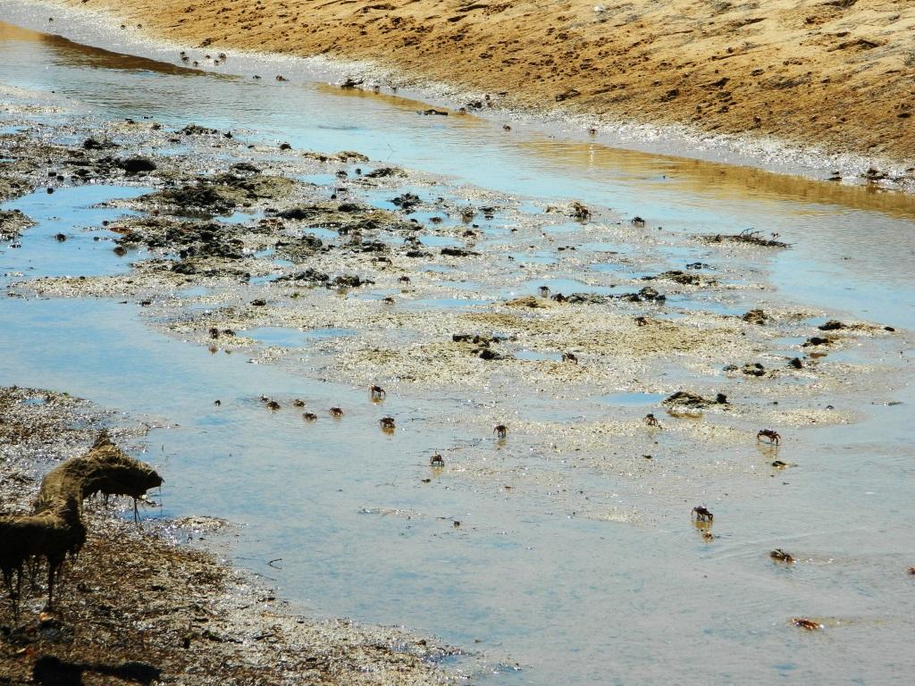 cosa vedere algarve_spiaggia_andalusia_granchi