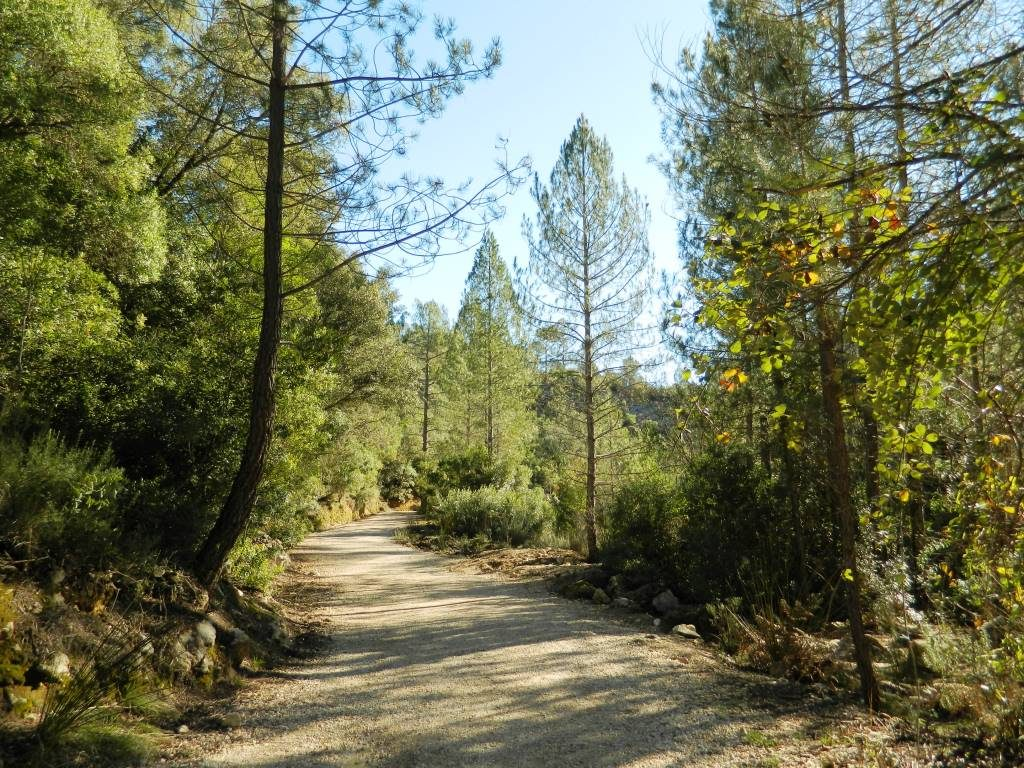miti_andalusia_vegetazione