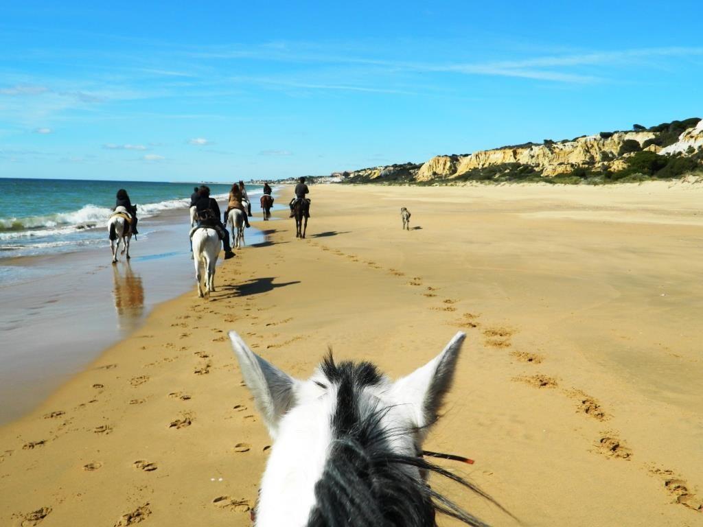 Doñana_cavallo_andalusia_spiaggia
