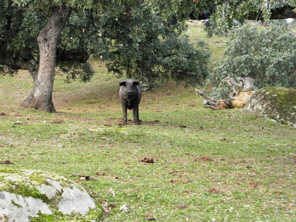 los-pedroches_andalusia_viaggio_tour_vedere_consigli_andalucia_visitare_cordoba