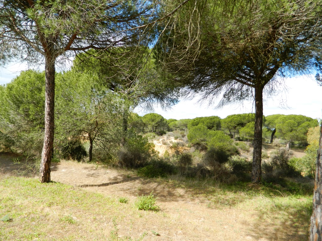 donana_tour_andalusia_viaggio_consigli_vacanze