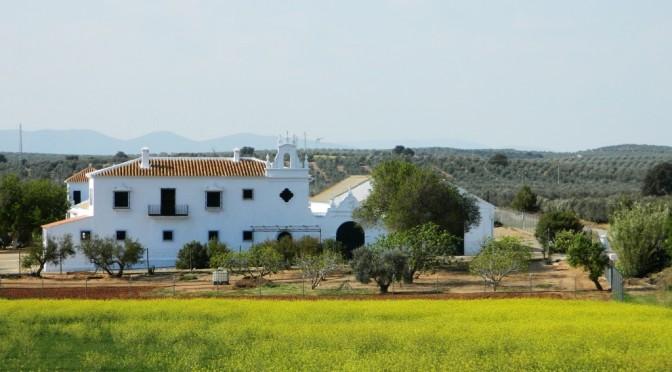 Malaga_Andalusia_Cosa