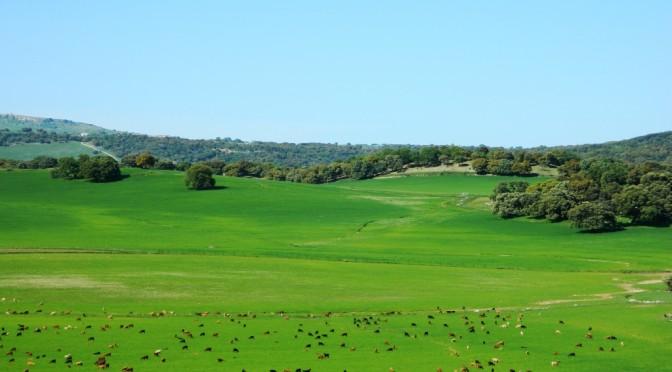 24 Parchi Naturali in Andalusia che ti faranno dimenticare la Giralda, la Mezquita e l'Alhambra