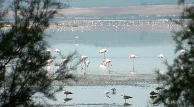 fuente-de-piedra_malaga_andalusia_andalucia_tour_consigli_viaggio_vacanza_cosa_vedere_laguna