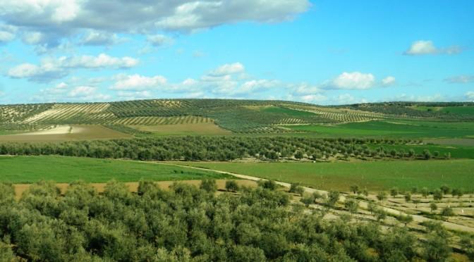 """L'olio d'oliva d'Andalusia: inimitabile """"oro verde""""!"""