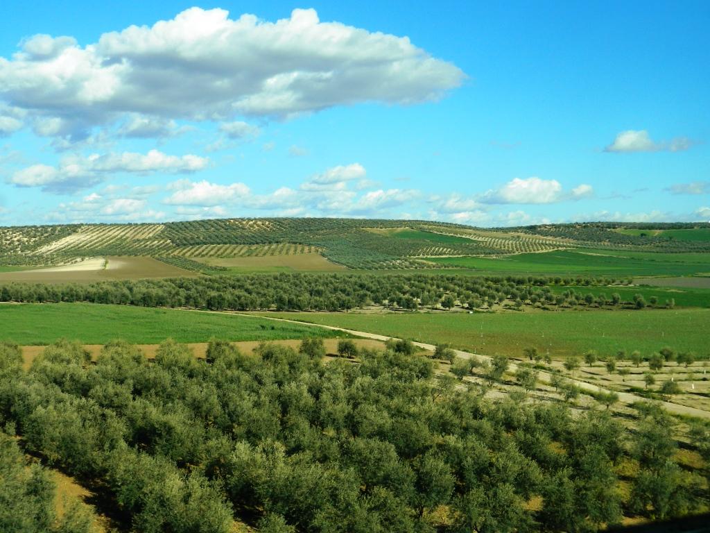 olio andalusia oliva cosa mangiare