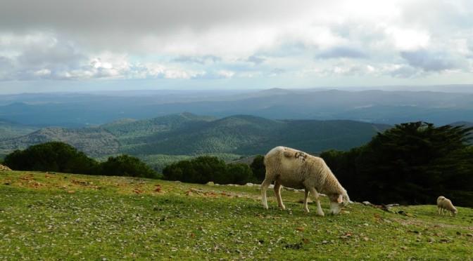 In campeggio nell'agreste Sierra di Tentudía e nel sud d'Estremadura