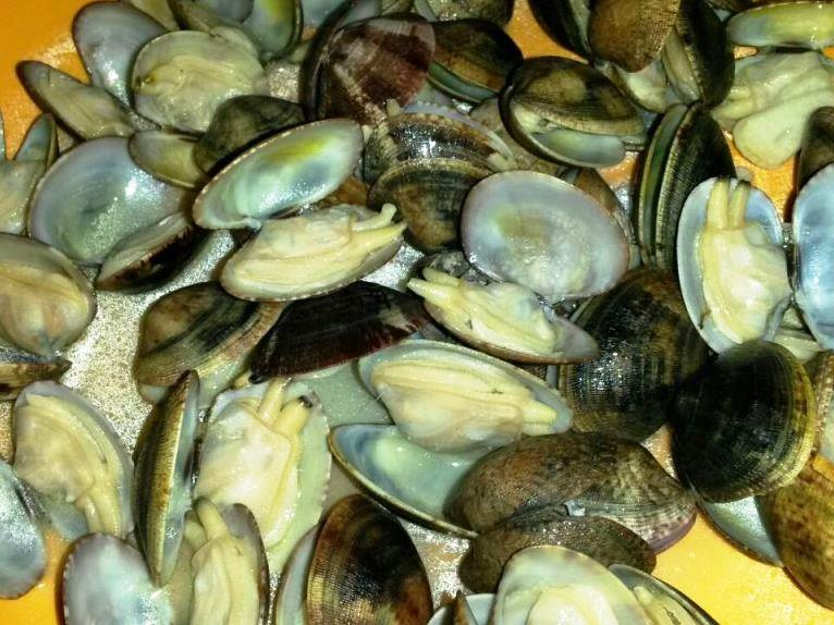 cosa mangiare andalusia pesce chirlas