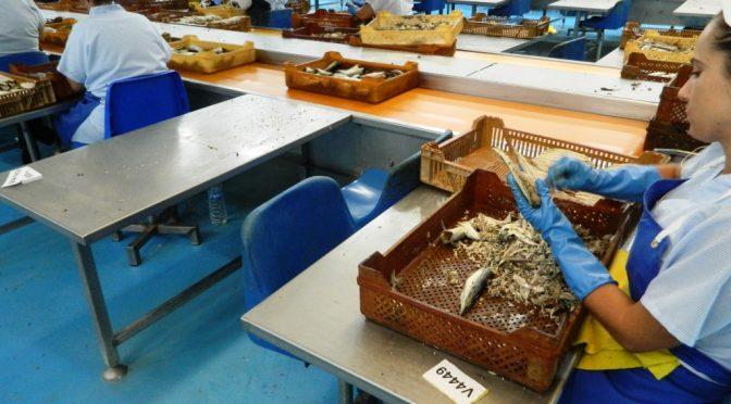 Il pesce sott'olio IGP d'Andalusia: un'azienda di Isla Cristina
