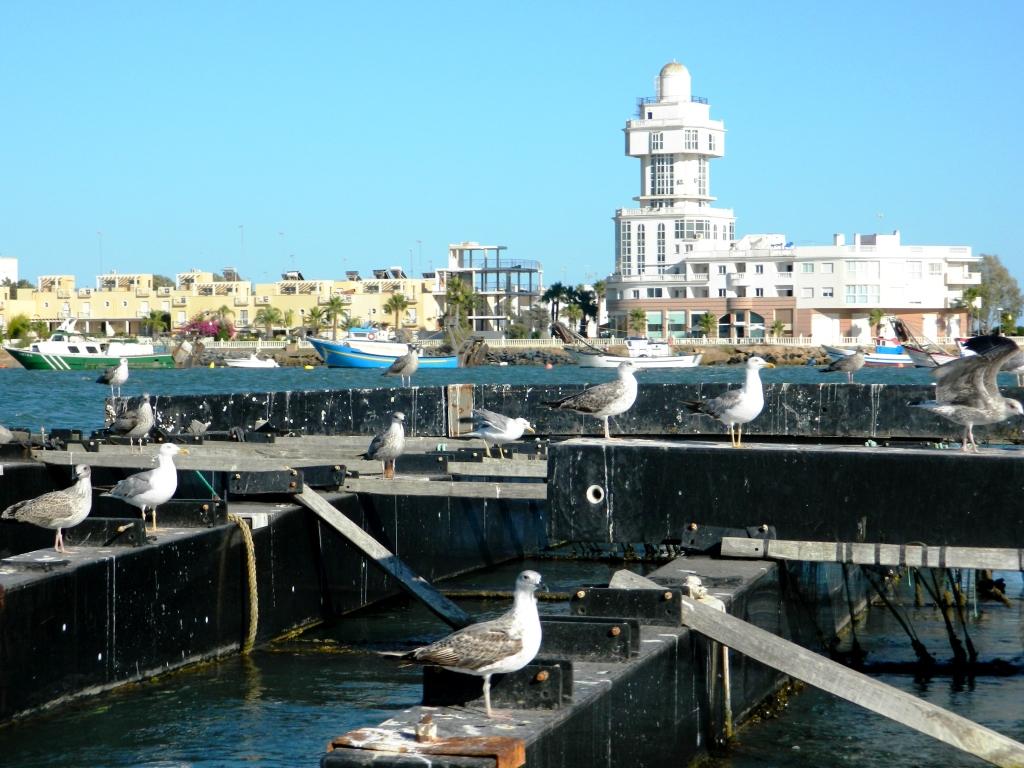 Barca_Huelva_Isla_cristina_riccio_di_mare_faro