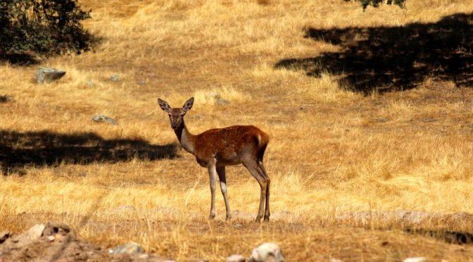 Birdwatching, linci e cervi in provincia di Jaén con Iberus