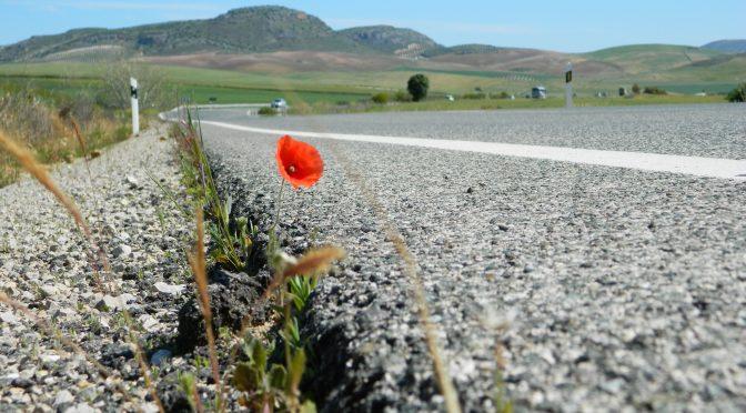 Noleggio auto in Andalusia economico: Siviglia e Malaga