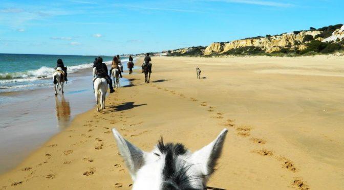 A cavallo dal Parco Doñana alla spiaggia di Mazagón