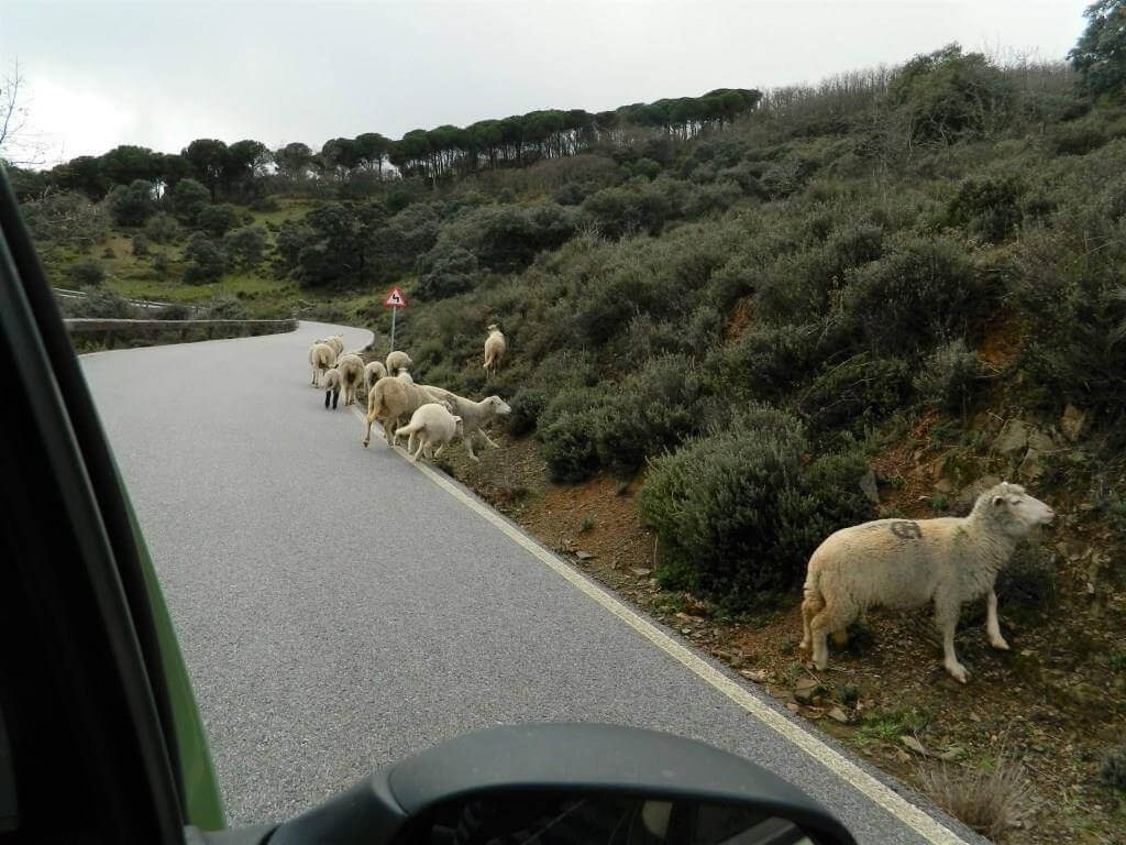 Andalusia_on_the_road_strade