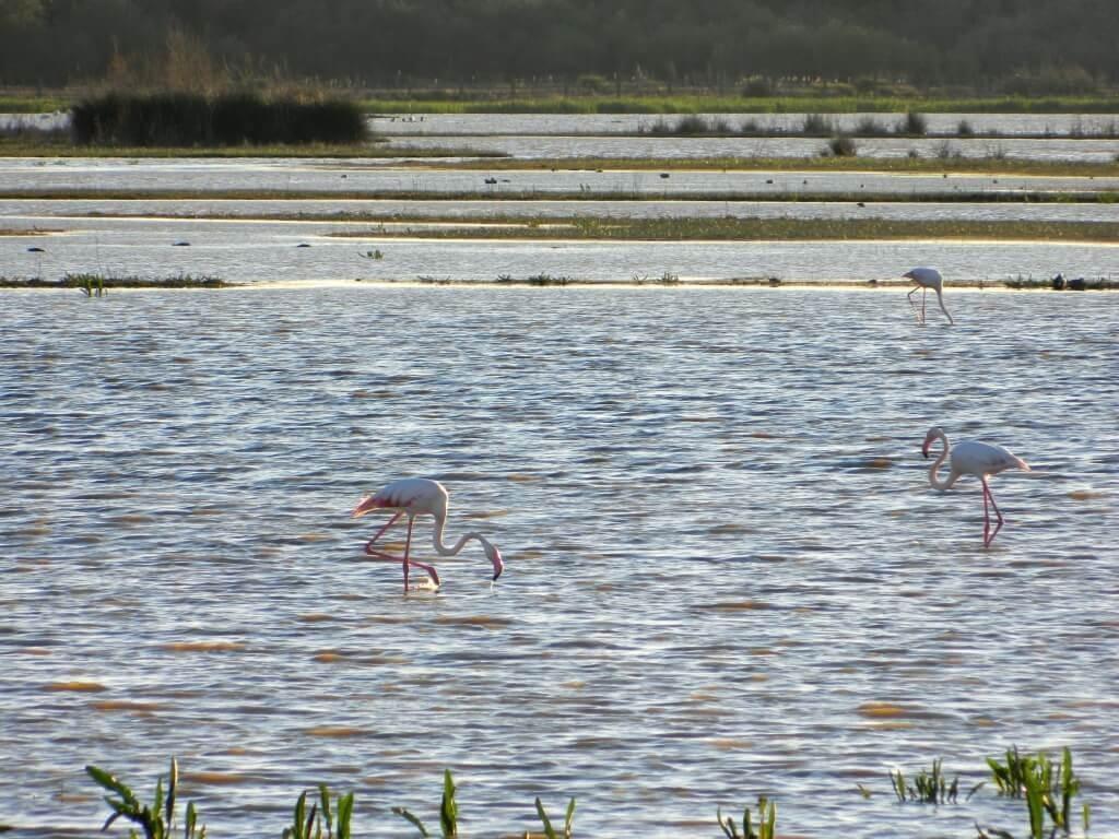 cosa_fare_doñana_birdwatching
