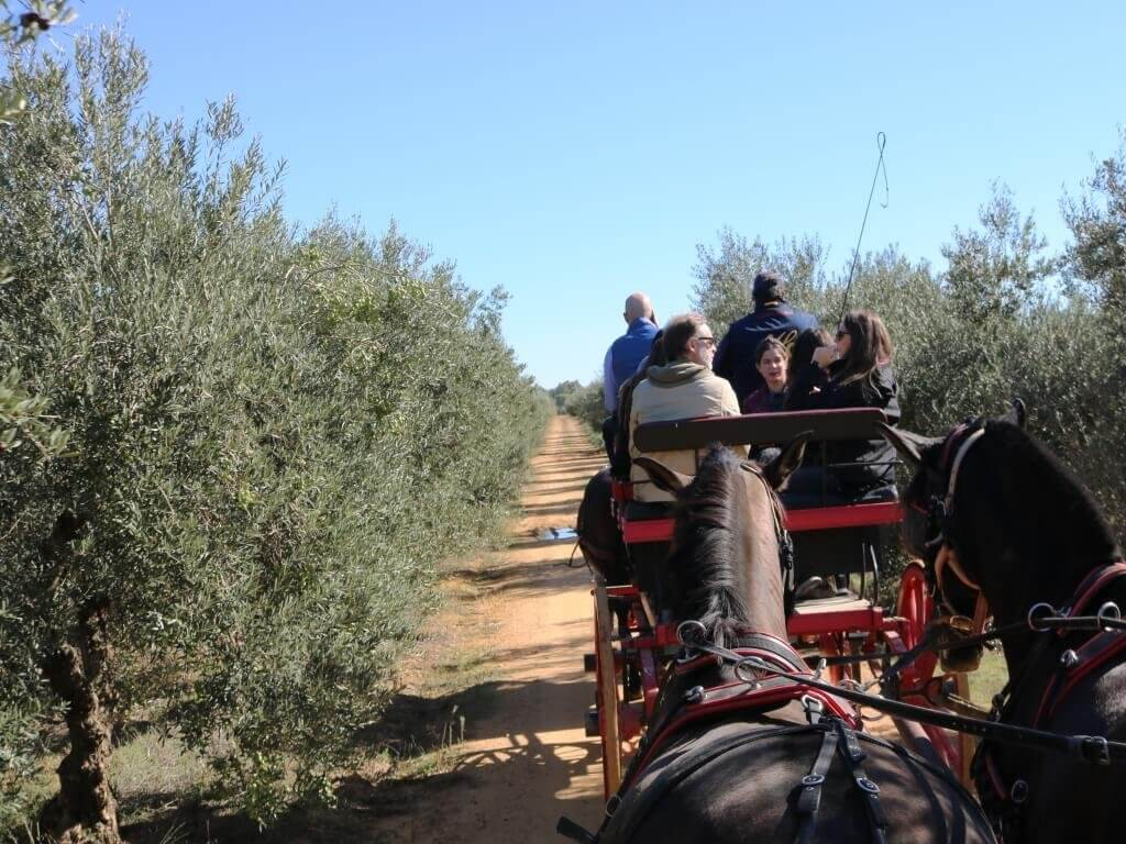 olio_turismo_siviglia_hacienda_carrozza