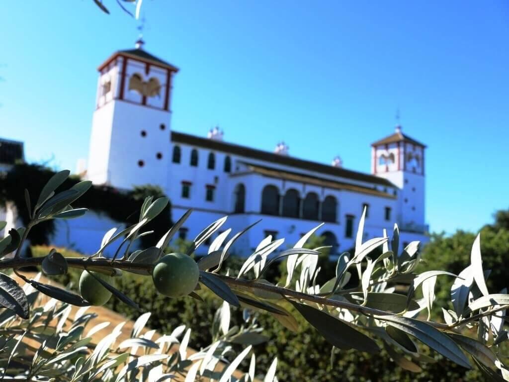 olio_turismo_siviglia_hacienda_olioturismo