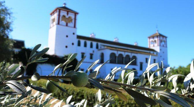 Olio turismo a Siviglia: dall'ulivo all'olio d'oliva