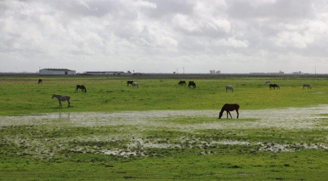 Visita da Siviglia a Doñana passando dall'Aljarafe